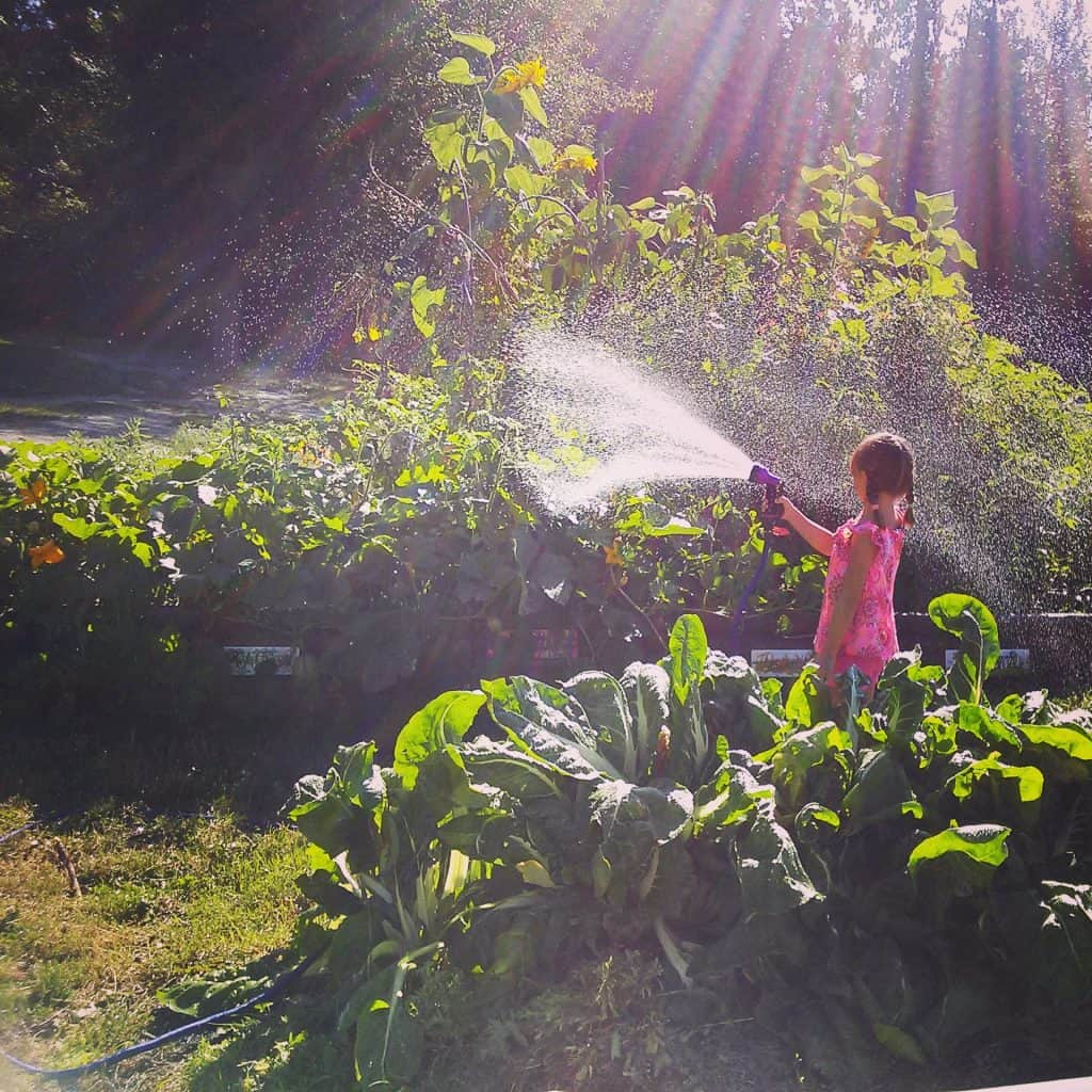 Watering the school garden