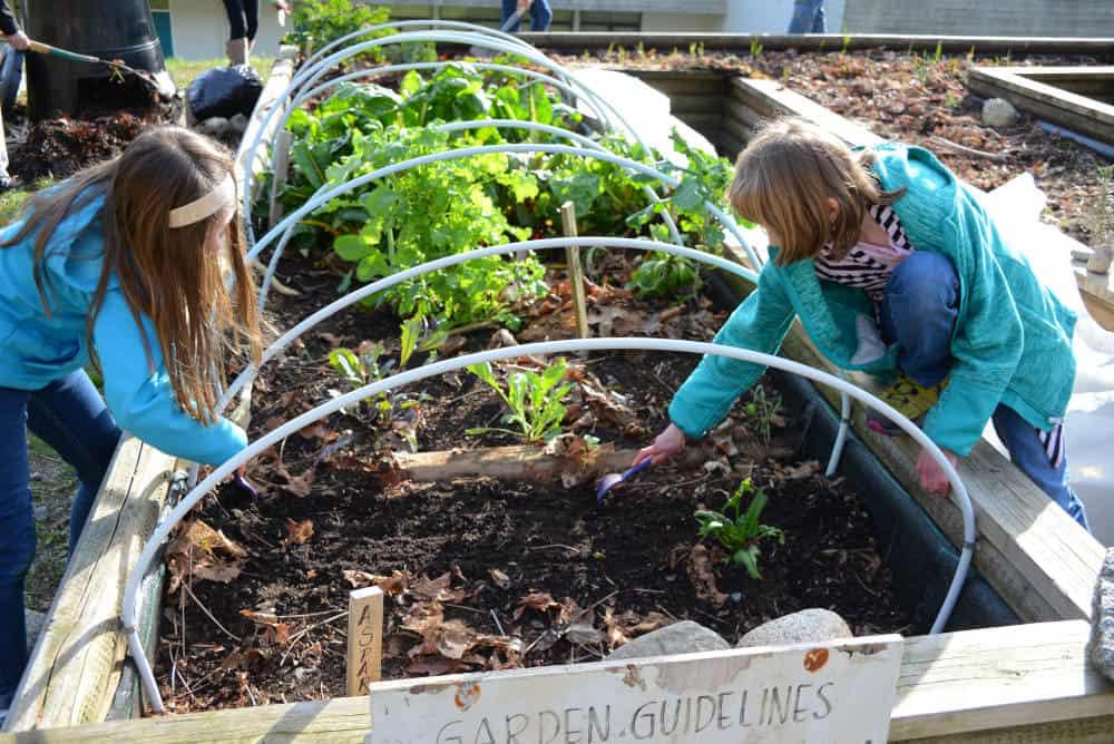 School vegetable garden