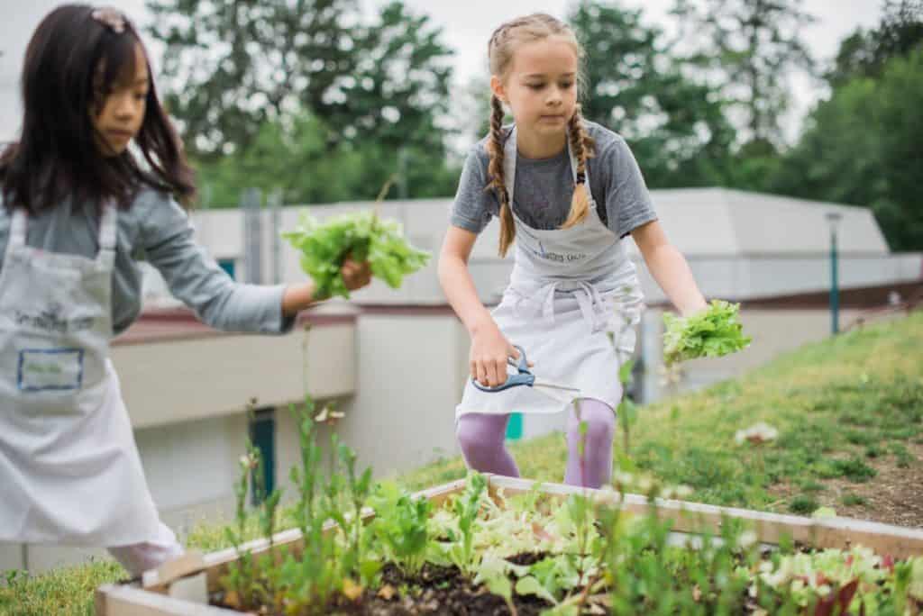 Purpose of our school garden programs