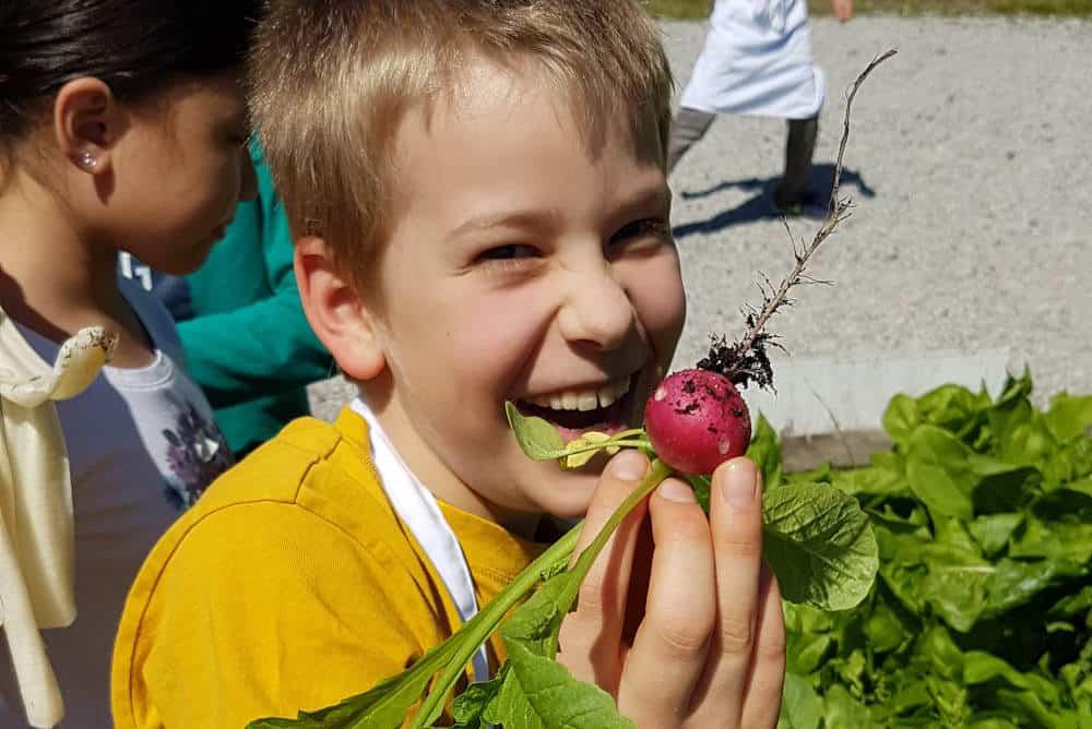 School kid eating radish